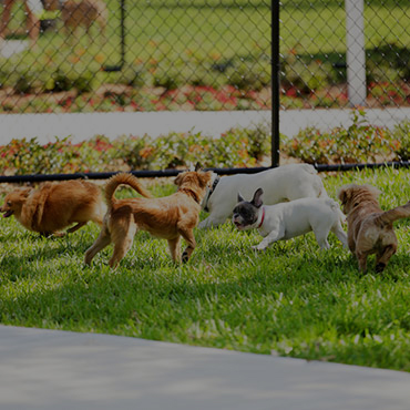 Large Dog Park at One Somerset Apartments